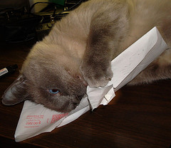 a cat opening a mail envelope